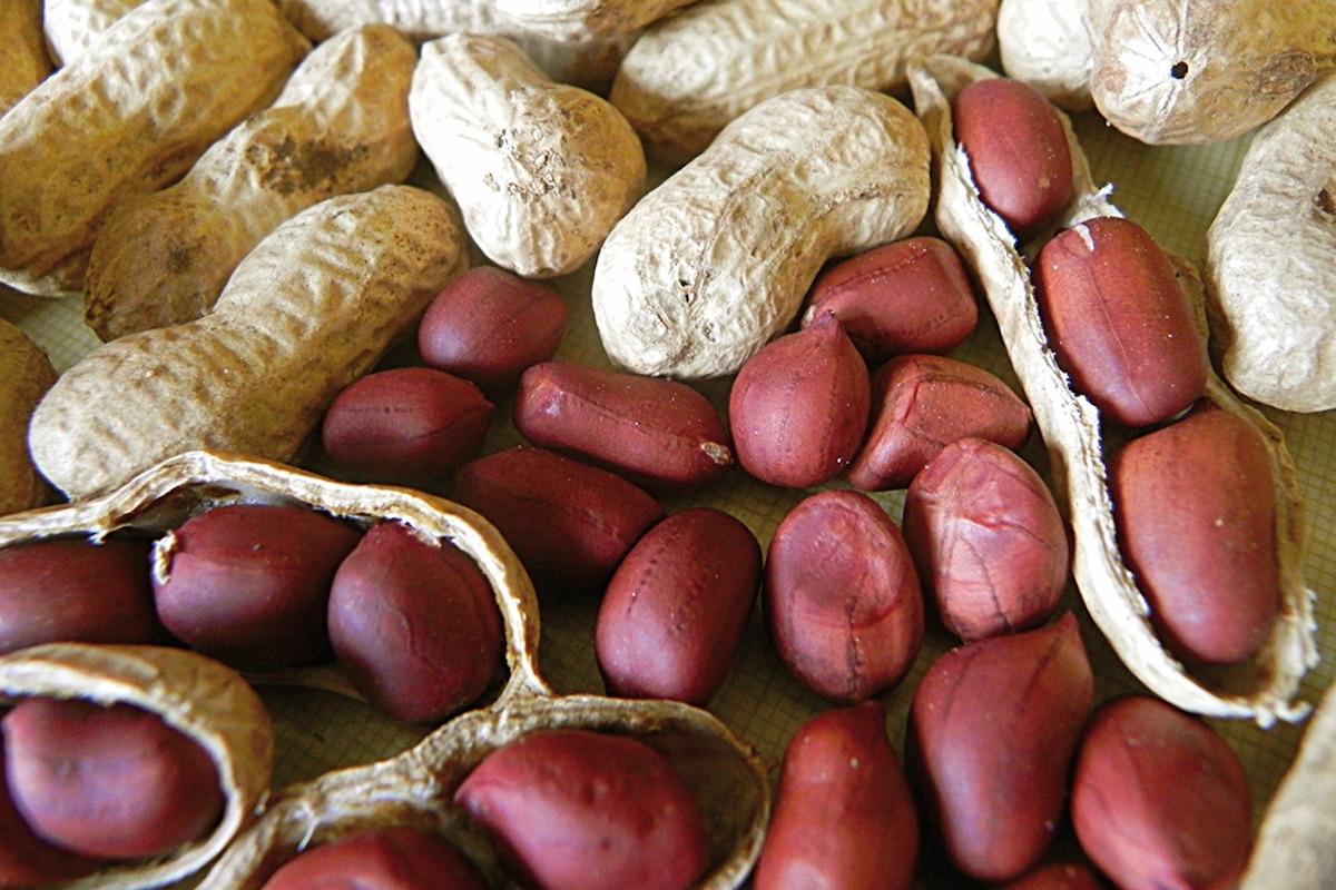 Valencian peanut