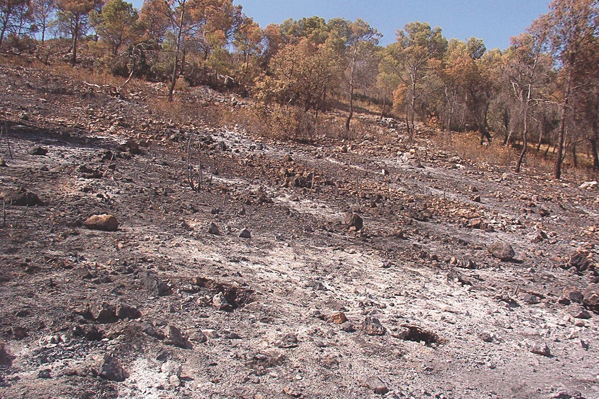 Pinoso (Alicante, Spain) soil one week after a fire in 2003