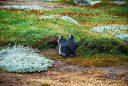 A couple of Magellanic penguins. / EzPzPics