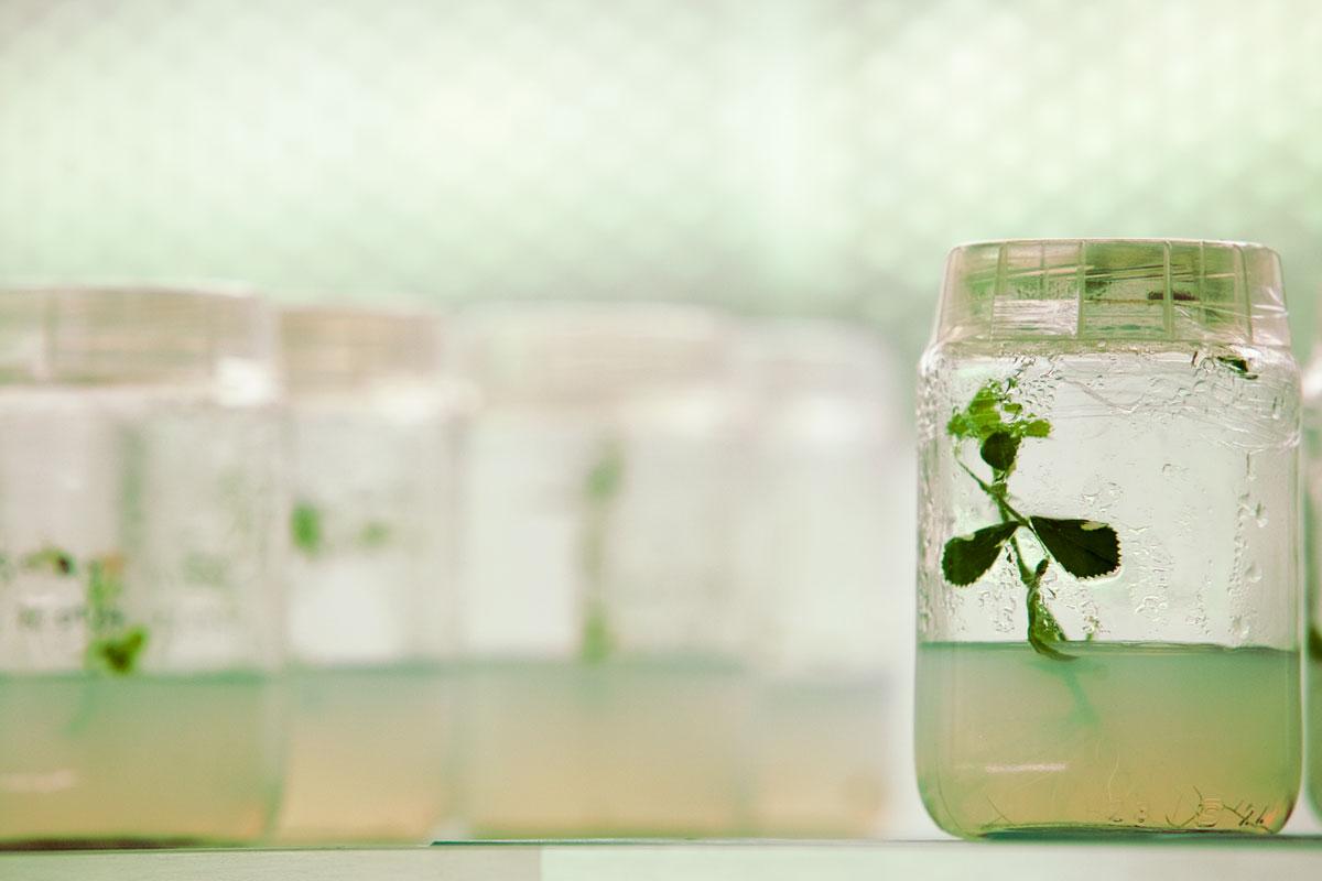 plantes del futur