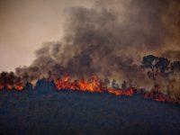 Wildfire in Andilla (La Serranía)