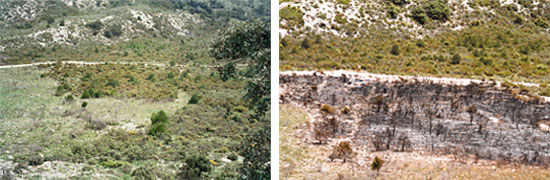 A plot in Tivisa (Tarragona, Spain), before and after a controlled burning event