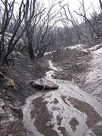 Consequences of rainfall after a fire on Mount Carmel (Israel).