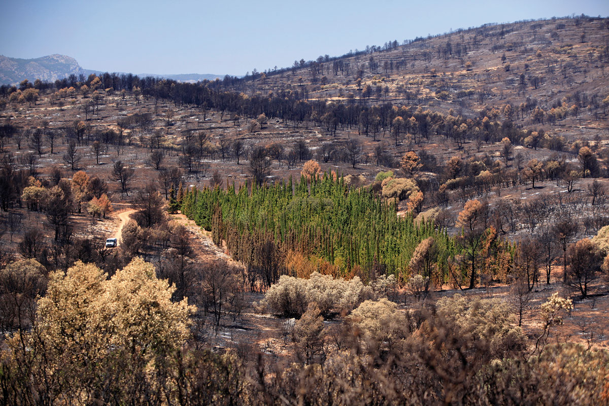 Plots from CypFire project affected by the wildfire in Andilla