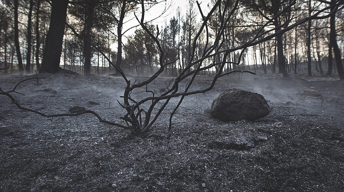 Soil can be negatively affected by a wildfire