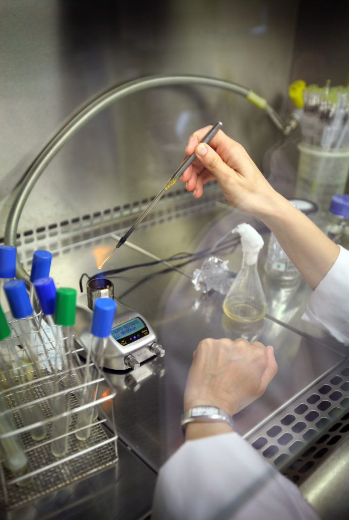 A female researcher working in the lab