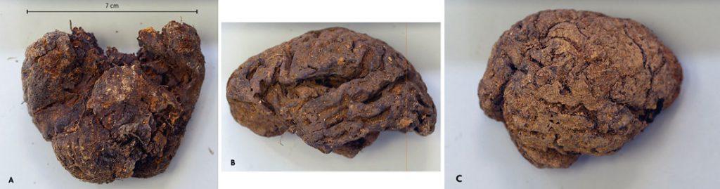 cervells de la Pedraja