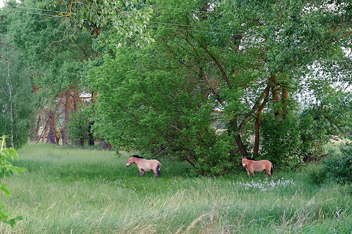 biodiversitat Txernòbil