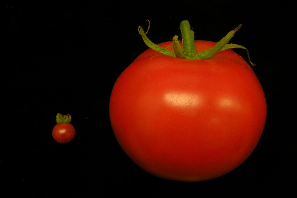 plant genes editing