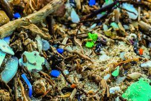 microplastics article