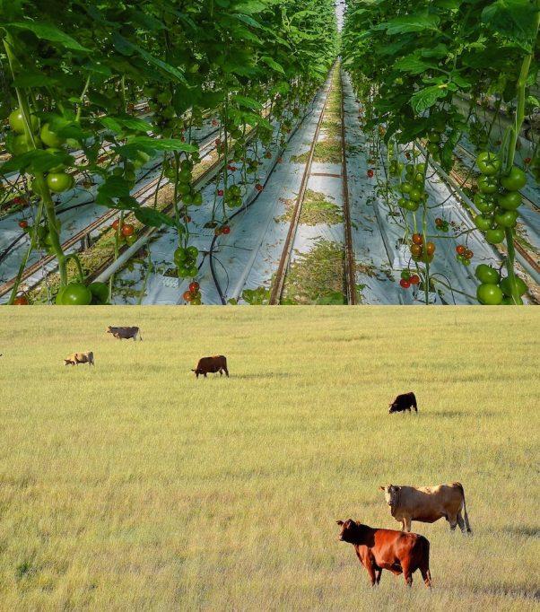 Aliments - creixement de la població