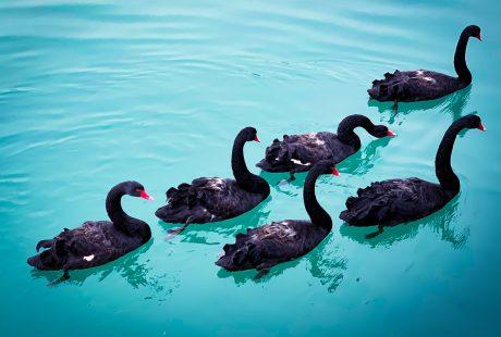 coronavirus black swans