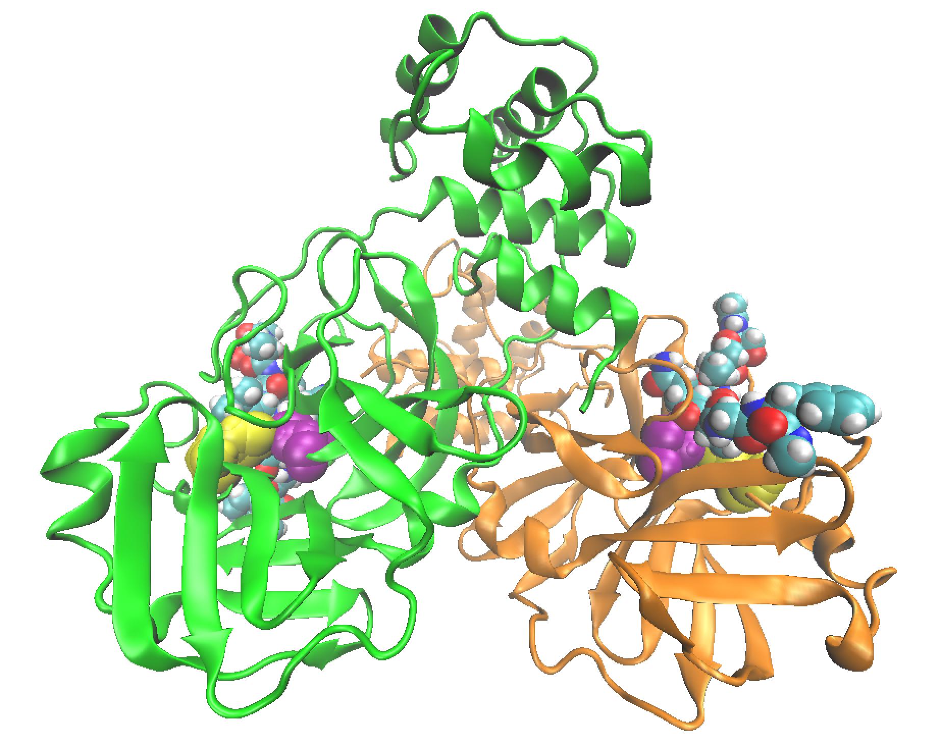 figura 2 proteases coronavirus