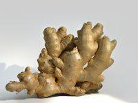 gingebre jardí animat